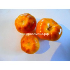 Оранжевый с фиолетовыми пятнами (Orange Fleshed Purple Smudge)